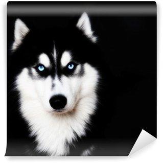 Vinylová Fototapeta Zblízka na modrých očích psa Sibiřský husky