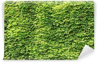 Vinylová Fototapeta Zelená Ivy