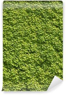 Vinylová Fototapeta Zelená stěna