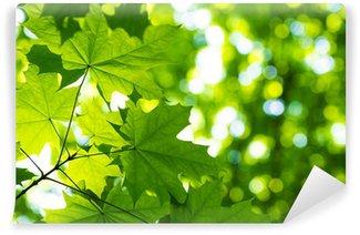Vinylová Fototapeta Zelené listy s slunce