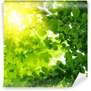 Vinylová Fototapeta Zelené listy s Sun Ray