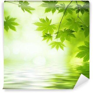 Vinylová Fototapeta Zelené listy se odrážejí ve vodě