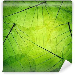 Vinylová Fototapeta Zelené listy vintage pozadí