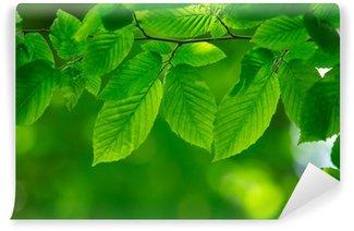 Vinylová Fototapeta Zelené listy