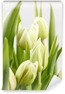 Vinylová Fototapeta Zelené tulipány