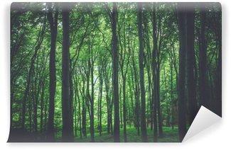 Vinylová Fototapeta Zelený les pozadí
