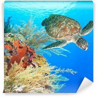 Vinylová Fototapeta Želva a korálů