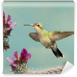 Vinylová Fototapeta Žena Široký-účtoval Hummingbird vysávání s květinami