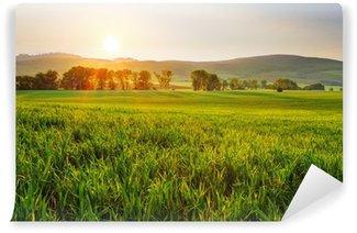 Fototapeta Vinylowa Zielone pola pszenicy