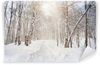 Vinylová Fototapeta Zimní Birchwood