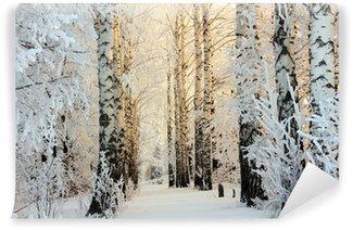 Vinylová Fototapeta Zimní bříza lesy v ranním světle