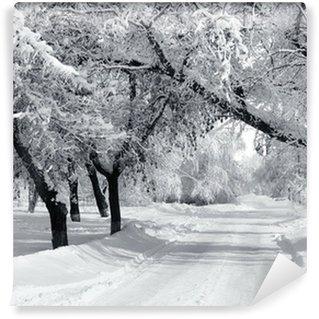 Vinylová Fototapeta Zimní park, krajina