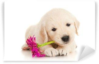 Vinylová Fototapeta Zlatý retrívr štěně s květinou