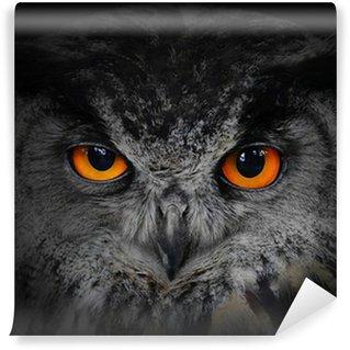 Fototapeta Winylowa Złe oczy. (Eagle Owl, Bubo bubo).