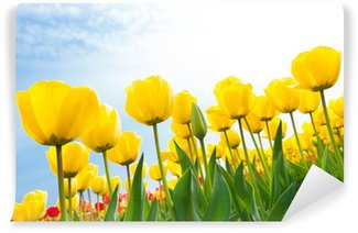 Vinylová Fototapeta Žluté tulipány