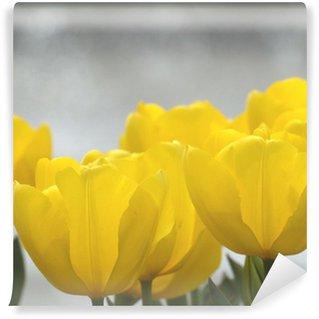 Vinylová Fototapeta Žlutý tulipán