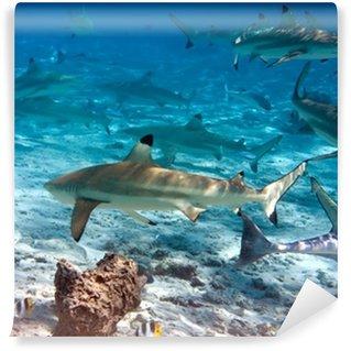 Vinylová Fototapeta Žraloci přes korálový útes v oceánu