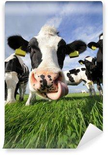 Vinylová Fototapeta Zvědavá kráva