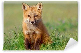 Vinylová Fototapeta Zvědavý Fox Kit