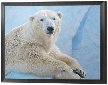 Framed Canvas Белый медведь.