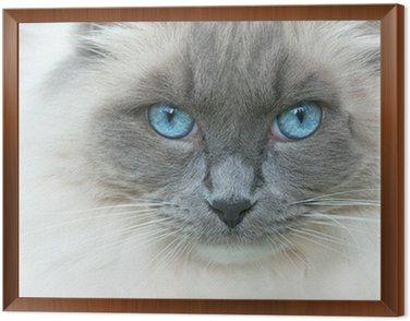 A cat named Elvis Framed Canvas