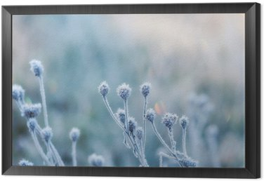 abstract natural background from frozen plant covered with hoarfrost or rime Framed Canvas