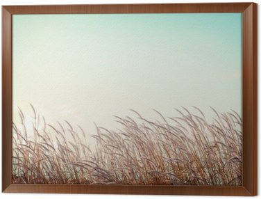 abstract vintage nature background - softness white feather grass with retro blue sky space Framed Canvas