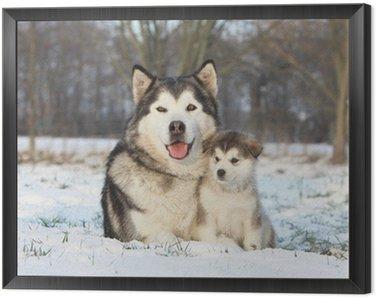 Framed Canvas alaskan malamute et son bébé dans la neige