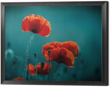 Framed Canvas Amazing poppy field . Summer flowers .