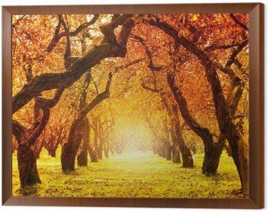 Autumn. Fall. Autumnal Park Framed Canvas