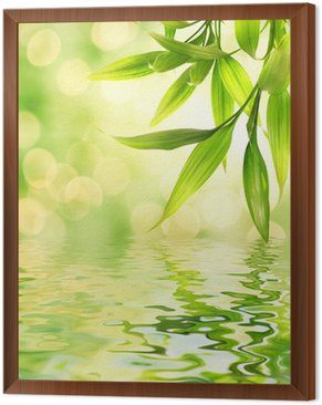 Framed Canvas Bamboo leaves reflected in rendered water