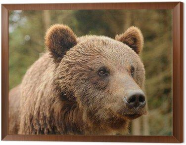 Framed Canvas Bear