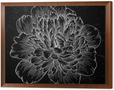 beautiful black and white peony flower isolated on background. Hand-drawn contour lines and strokes.