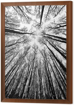 Framed Canvas black and white trees silhouettes