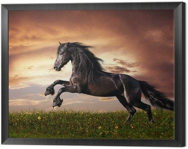 Black Friesian horse gallop