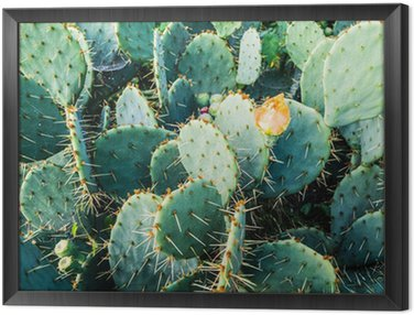 Framed Canvas blossoming cactus