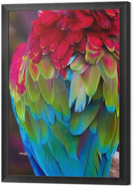 Framed Canvas Blue,red and green macaw feathers