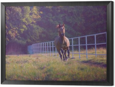 Framed Canvas Brown horse galloping on the trees background along white fence at the summer