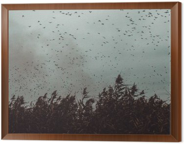 Framed Canvas bunch of Birds flying close to cane in a dark sky- vintage style black and white