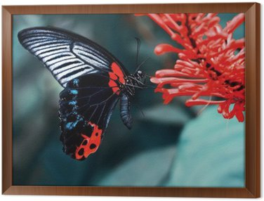 Framed Canvas Butterfly