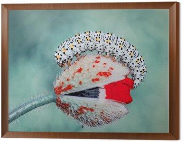 Framed Canvas Caterpillar