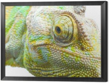 Chameleon Framed Canvas
