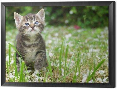 chaton tigré dans l'herbe Framed Canvas