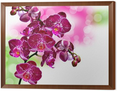 Close up of orchid flower Framed Canvas