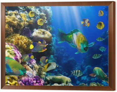 Framed Canvas Coral colony and coral fish