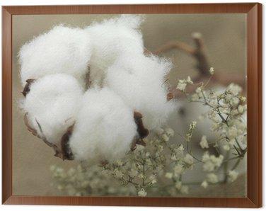 Framed Canvas cotton flower