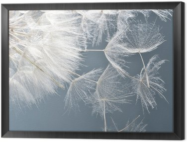 Dandelion clock: wishes and dreams :) Framed Canvas