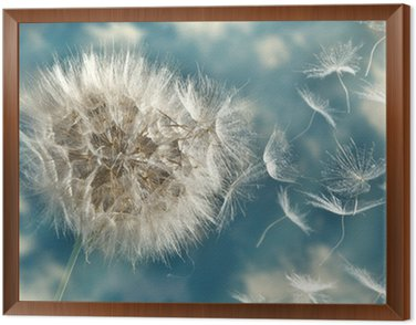 Framed Canvas Dandelion Loosing Seeds in the Wind