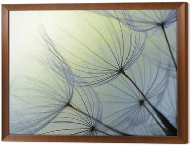 Framed Canvas dandelion seed