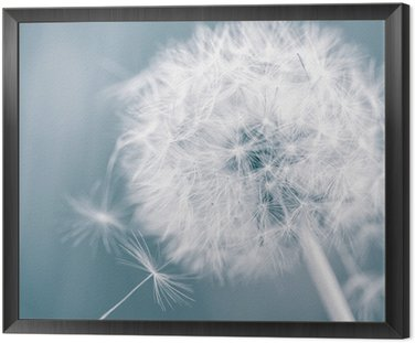 Framed Canvas Dandelion